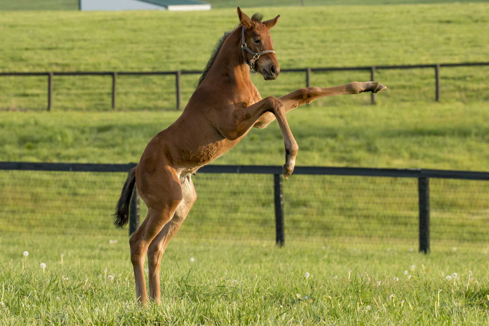 Thoroughbred Horse Breeding Foaling And Boarding Foreverspring Farm