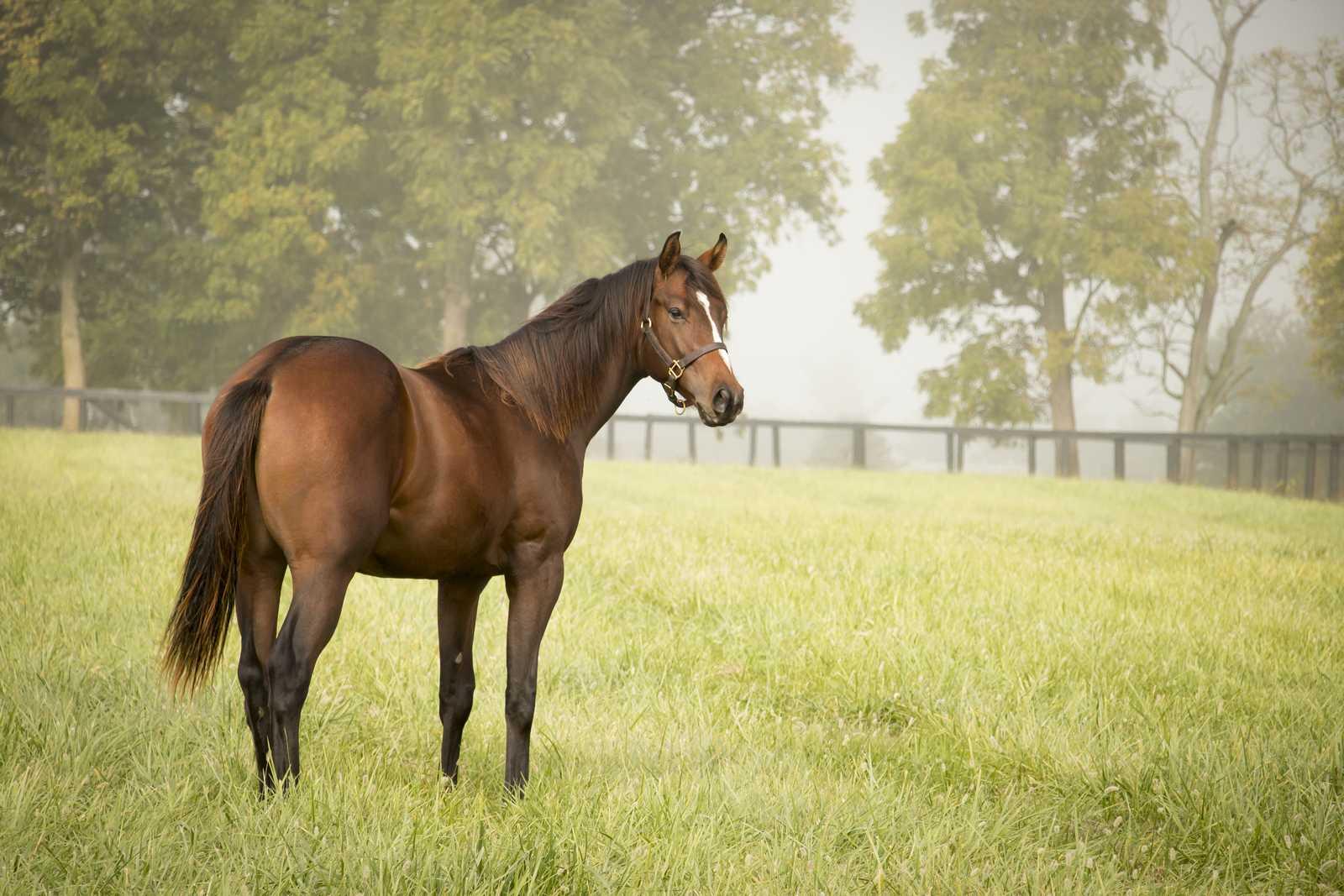 horse76