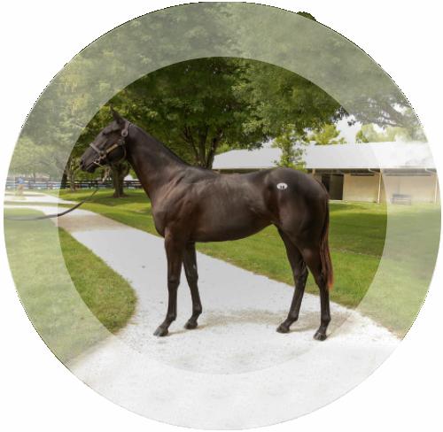Horsemanship in Kentucky